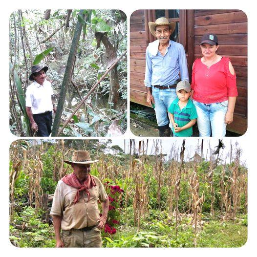 Gráfica alusiva a la noticia  Avanza el cuidado y conservación de los bosques gracias a las familias vinculadas al Esquema de Pagos por Servicios Ambientales a través del Incentivo Forestal Amazónico