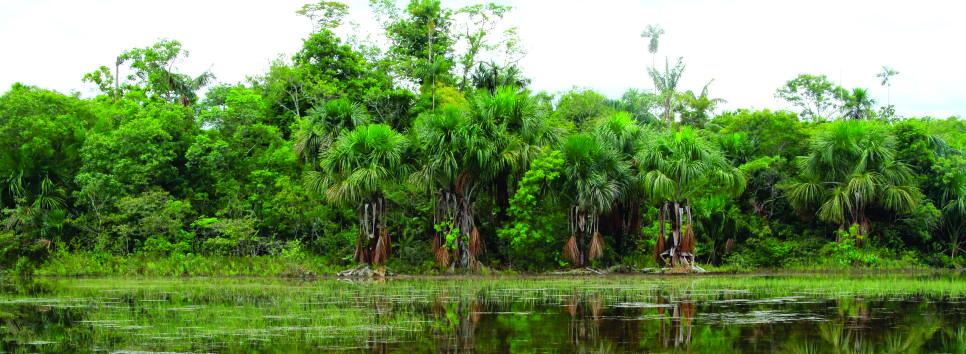 imagen alusiva a  Apoyo de la ONF Andina a la Mesa Forestal para la capacitación en Gobernanza Forestal