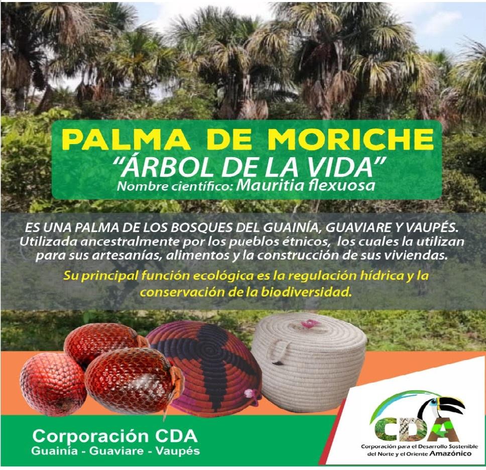 """imagen alusiva a  La Palma de Moriche, el """"Árbol de la Vida"""""""