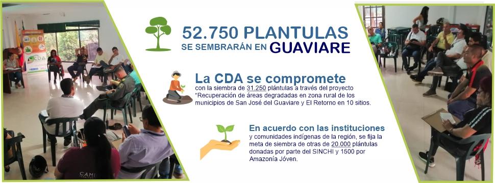 Gráfica alusiva a 52.750 PLÁNTULAS SE SEMBRARÁN EN EL GUAVIARE  PARA APOYAR LA META NACIONAL DE 180 MILLONES DE ÁRBOLES AL 2022